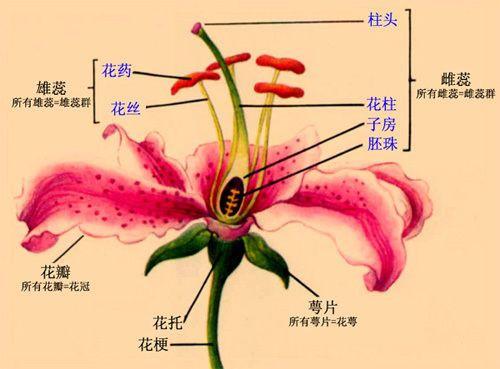 1|苹果花结构示意图